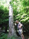 Pagáče niekto prilepil na strom