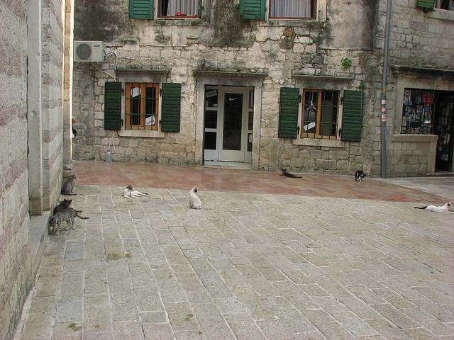 námestie v boke Kotorskej