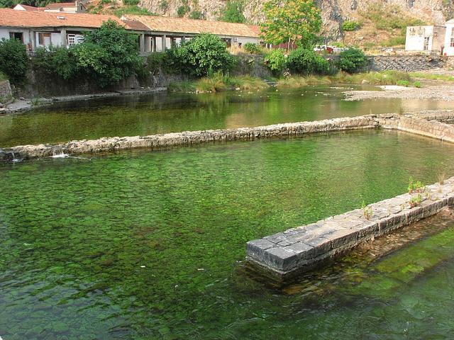 zeleň v Kotore
